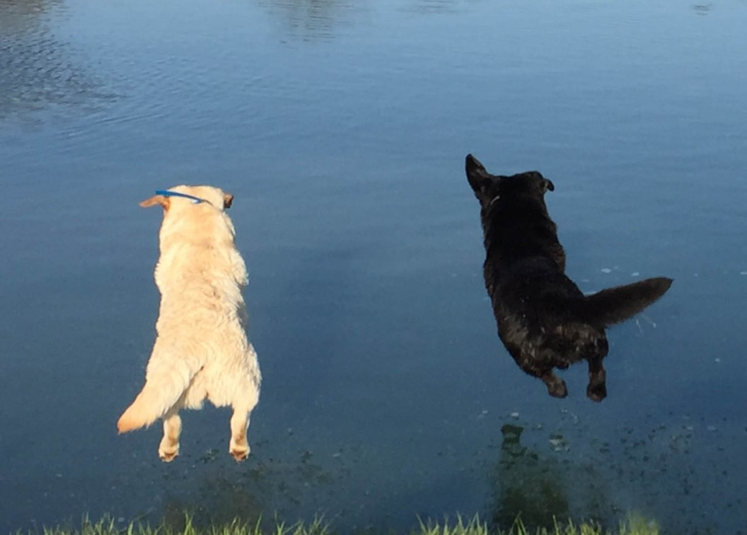 May as well leap!